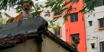 ley hidalgo prohibir perros azotea