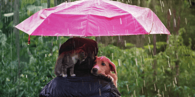 How to keep your beloved pets safe as Storm Bella batters the UK