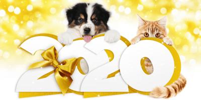 perro y gato 2020