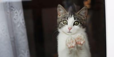 Kätzchen verschwindet: Drei Monate später zeigt der Nachbar sein wahres Gesicht!