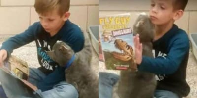 Boy reads to shelter cat