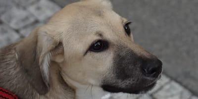 Su perro sale a dar una vuelta: al ver cómo regresa, jura que dará con el culpable
