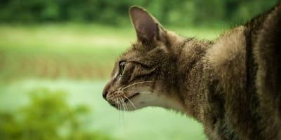 gato atigrado sobre un fondo verde