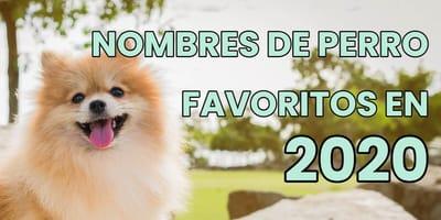 Los nombres de perro más populares en 2020