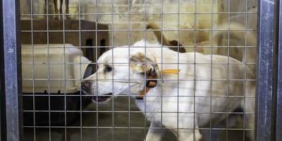 perro abandonado jaula