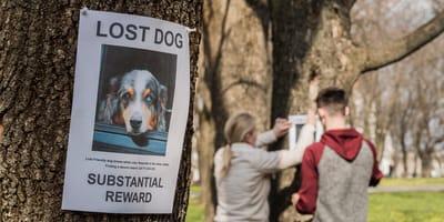 dos personas cuelgan carteles de su perro desaparecido