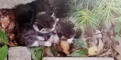 gatitos abandonados jardin