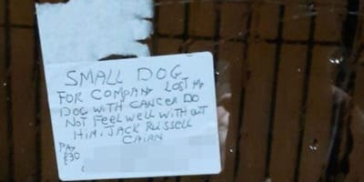 Delivery driver broken-hearted by customer's sad note