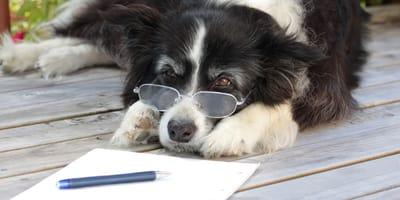 Was muss im Kaufvertrag für einen Hund stehen?