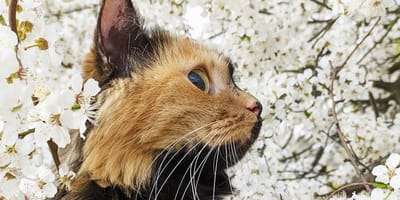 Two-faced cat stuns everyone with her unique looks