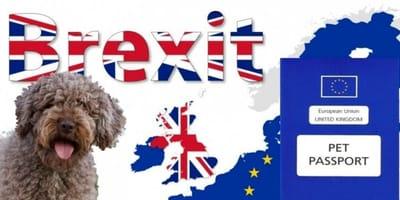 Animali domestici e Brexit: ecco cosa cambia per viaggiare