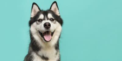 Zum Selbermachen: 11 einfache Tipps und Tricks für deinen Hund während der Coronakrise