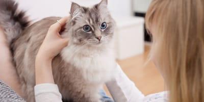 Le 8 razze di gatti più affettuose e socievoli