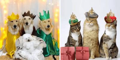 Perros y gatos vestidos de reyes magos
