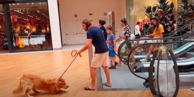 Golden retriever boi się schodów ruchomych: reakcja opiekuna sprawia, że wszyscy odwracają wzrok (VIDEO)