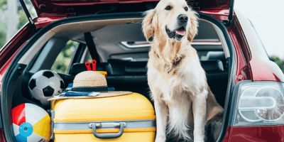 Pet travel to and from the UK after Brexit