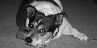 cane-triste-abbandonato