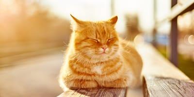 Los mejores 30 nombres para gatos amarillos que irradian belleza