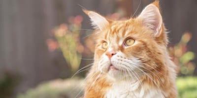 donna-con-in-braccio-un-gatto-rosso