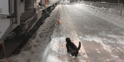 Kot na stacji kolejowej