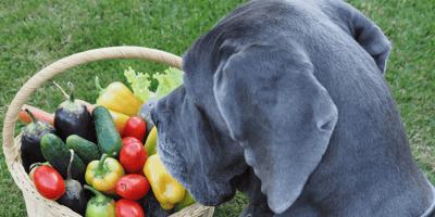 perro oliendo calabacin y otras verduras