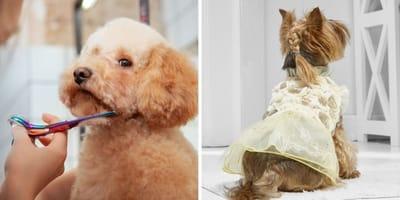 Los mejores cortes de pelo para perros