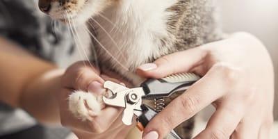 Cómo cortarle las uñas a un gato: pasos para hacerlo correctamente