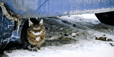 gato callejero en la nieve