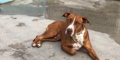 perro marron tumbado cerca de un charco