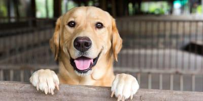 Come capire se il cane cerca di attirare l'attenzione?