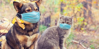 dog and cat wearing a mask