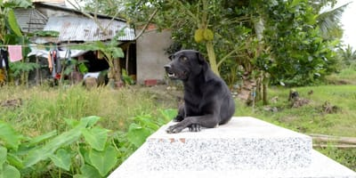 Neighbours in tears when they find out why family's dog is always at the cemetary