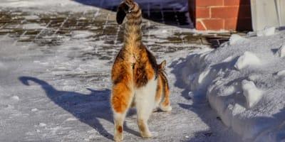 ¿Por qué tu gato te pega el trasero a la cara?