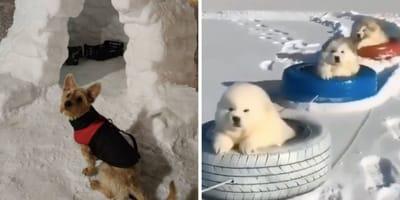 perros disfrutando en la nieve