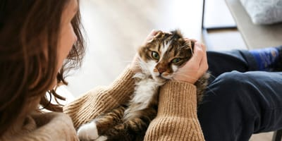 una mujer acaricia a un gato sobre sus piernas