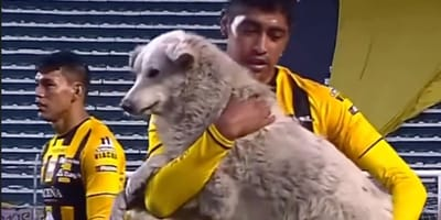 Football player holds dog