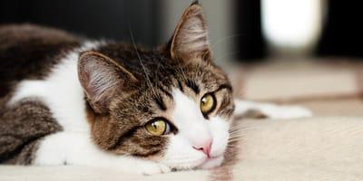 Cómo saber si mi gato está enfermo: síntomas principales