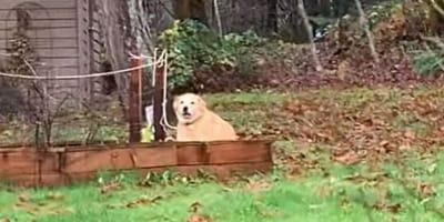 Pies w ogródku warzywnym
