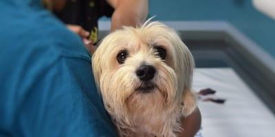Sindrome di Chiari nel cane: una malattia da conoscere!