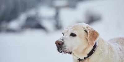 perro blanco paisaje nevado