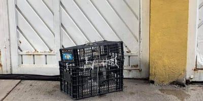 Encuentra una caja abandonada en la puerta y ya no puede contener un grito de auxilio