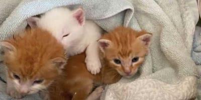 Sie nimmt 3 Katzenbabys auf: Ihr Labrador schnüffelt kurz und ... (Video)