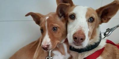 cachorro junto a su perra mama