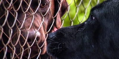 Pies przytula drugiego psa