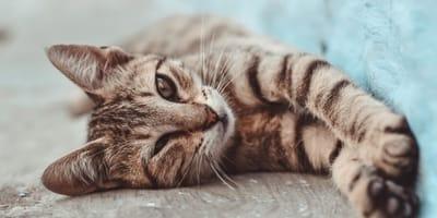 Kätzchen liegt auf dem Boden