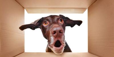 Tips de psicología: pasos a seguir antes de comprar un perro