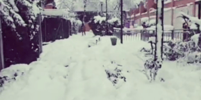 dalmata jugando en la nieve