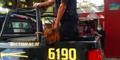 Perrito de Yucatán es arrestado por atacar a un gato y no lo dejan volver a su casa