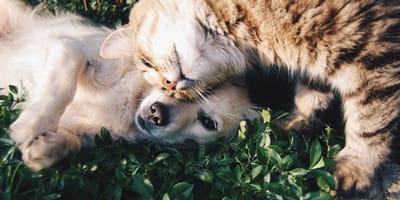 Toxoplasmosi del cane: sintomi, diagnosi e terapia