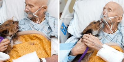 Dog owner makes one last heartbreaking request following tragic diagnosis